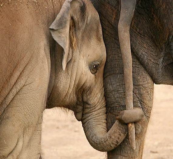 Mother-Day-The-Beauty-Of-Motherhood-In-The-Animal-Kingdom-_031