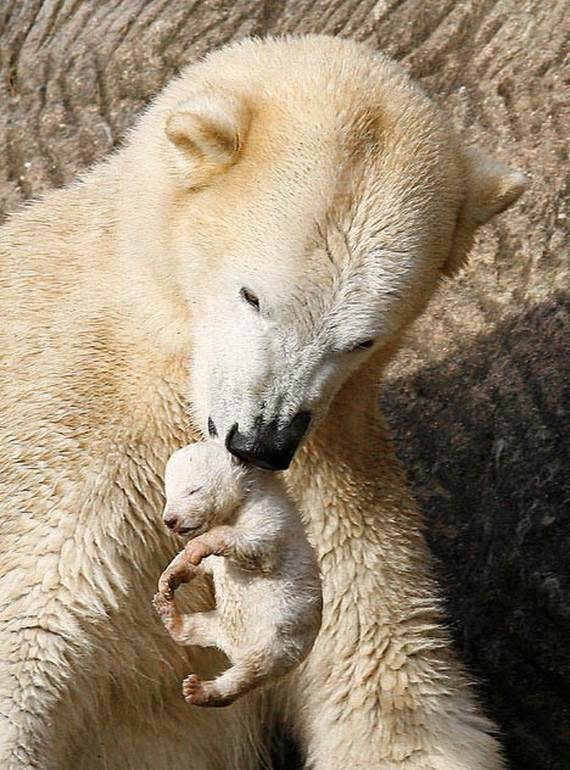 Mother-Day-The-Beauty-Of-Motherhood-In-The-Animal-Kingdom-_051