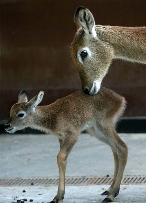 Mother-Day-The-Beauty-Of-Motherhood-In-The-Animal-Kingdom-_111