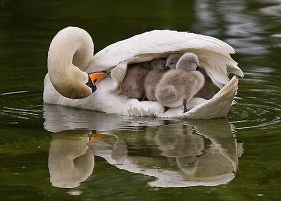 Mother-Day-The-Beauty-Of-Motherhood-In-The-Animal-Kingdom-_191