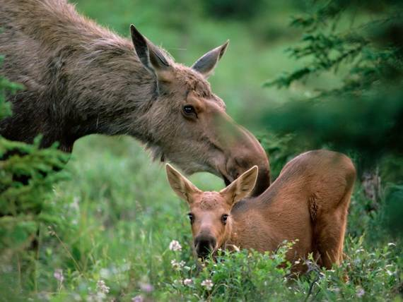 Mother-Day-The-Beauty-Of-Motherhood-In-The-Animal-Kingdom-_341