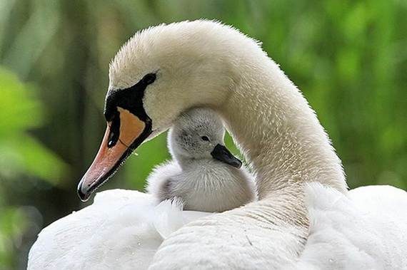 Mother-Day-The-Beauty-Of-Motherhood-In-The-Animal-Kingdom-_371