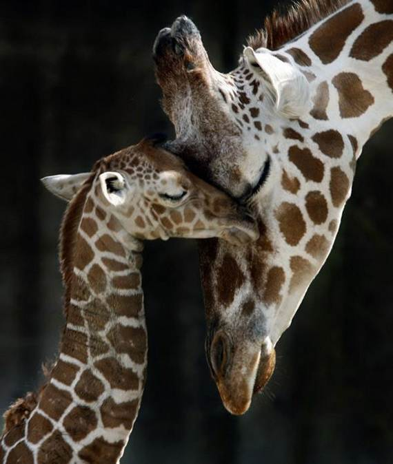 Mother-Day-The-Beauty-Of-Motherhood-In-The-Animal-Kingdom-_401