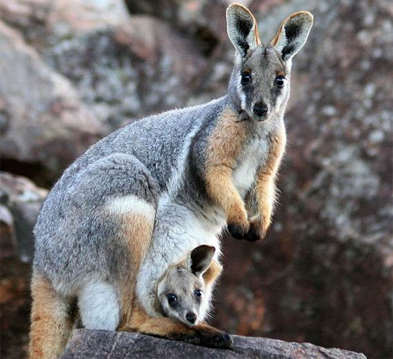 Mother-Day-The-Beauty-Of-Motherhood-In-The-Animal-Kingdom-_451