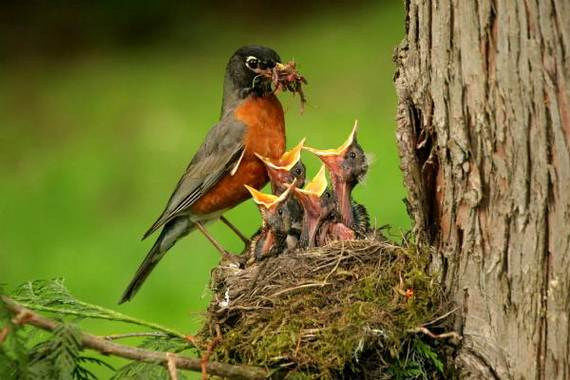 Mother-Day-The-Beauty-Of-Motherhood-In-The-Animal-Kingdom-_511