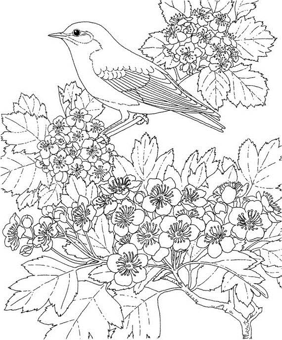 adult-colouring-pages-easter-_10