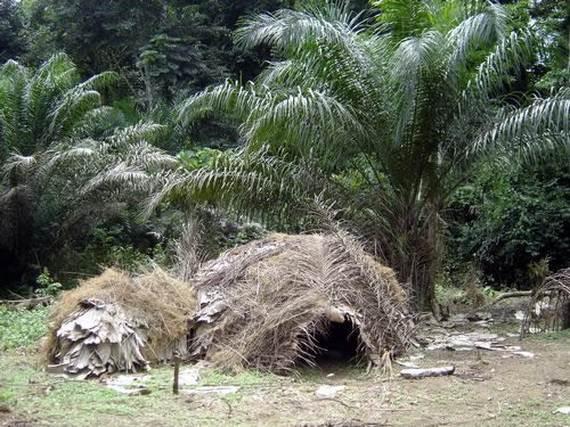 dja-faunal-reserve-cameroon-_16