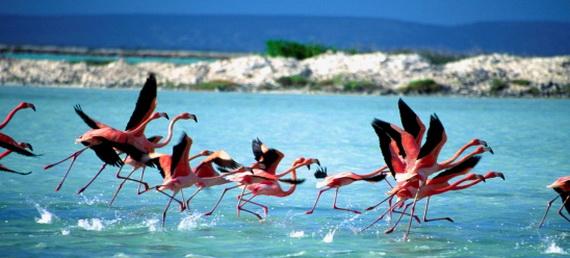 Dutch Caribbean Island Paradise on the ABC Islands (Aruba, Bonaire and Curacao) _4