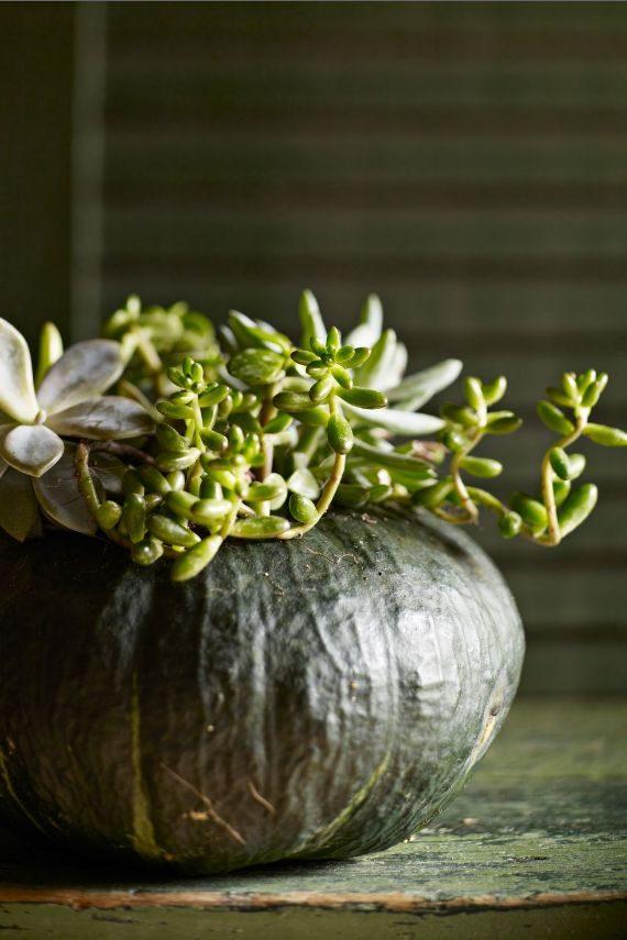 Succulent Pumpkin Carving Idea