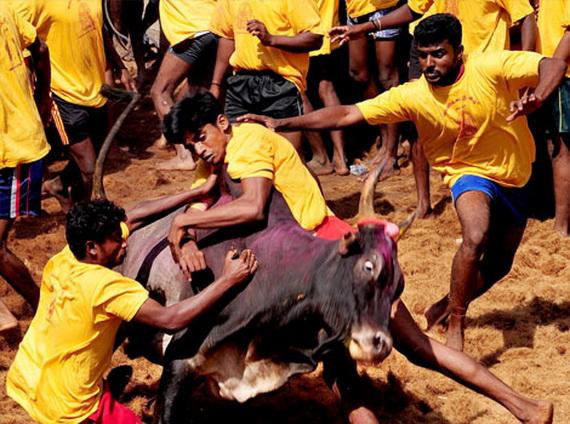 Pongal – Celebrating the Indian Harvest Festival_05
