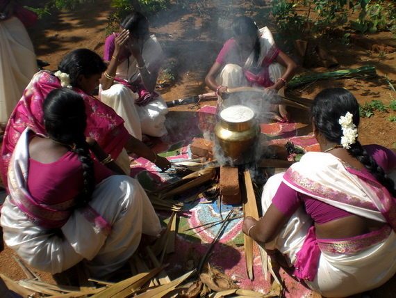Pongal – Celebrating the Indian Harvest Festival_19