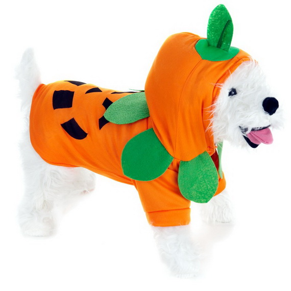 Unique and Beautiful Halloween Costumes Ideas for Pets_31
