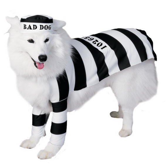 Unique and Beautiful Halloween Costumes Ideas for Pets_35
