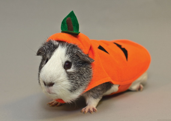 Unique and Beautiful Halloween Costumes Ideas for Pets_38