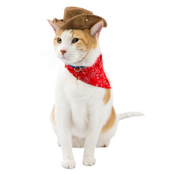 Unique and Beautiful Halloween Costumes Ideas for Pets_46