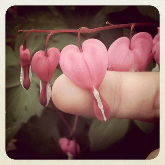 Lovely Hearts for your Valentine's Day_01