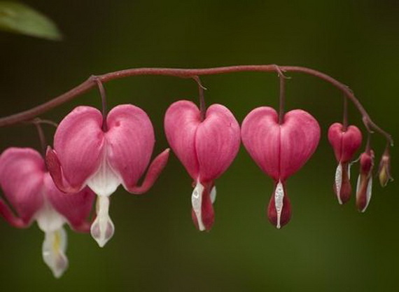Lovely Hearts for your Valentine's Day_28