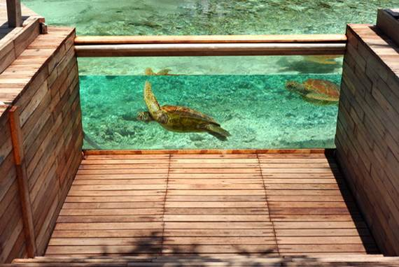Best-Overwater-Bungalows-In-Tahiti-Le-Meridien-Bora-Bora-_14