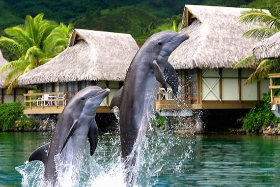 Best-Overwater-Bungalows-In-Tahiti-Le-Meridien-Bora-Bora-_41