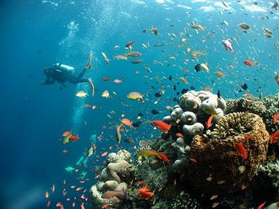 Sea Adventures- Explore the depths of the sea in Malaysia_05
