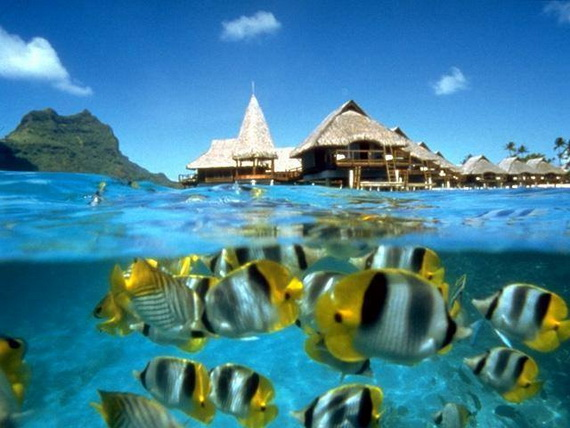 Sea Adventures- Explore the depths of the sea in Malaysia_06