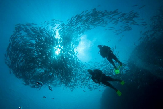 Sea Adventures- Explore the depths of the sea in Malaysia_10