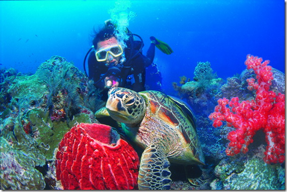 Sea Adventures- Explore the depths of the sea in Malaysia_21