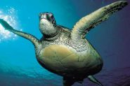 Sea Adventures- Explore the depths of the sea in Malaysia