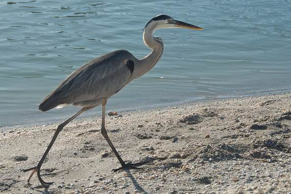 Sanibel-Island-Florida-The-Sea-Shell-Capital_02