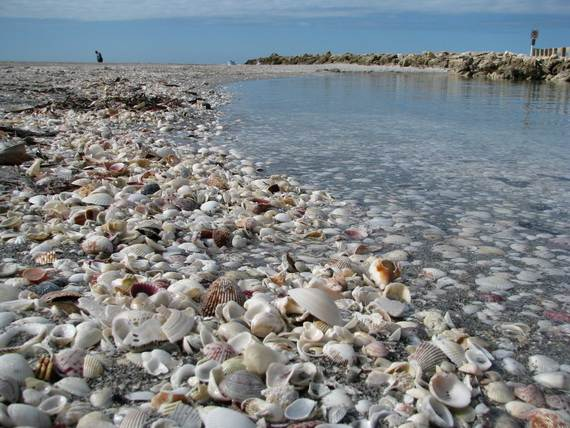 Sanibel-Island-Florida-The-Sea-Shell-Capital_06