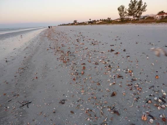 Sanibel-Island-Florida-The-Sea-Shell-Capital_14