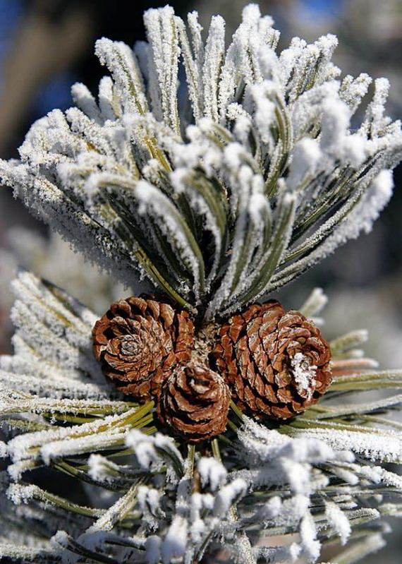 40-Awesome-Pinecone-Decorations-For-the-holidays-34