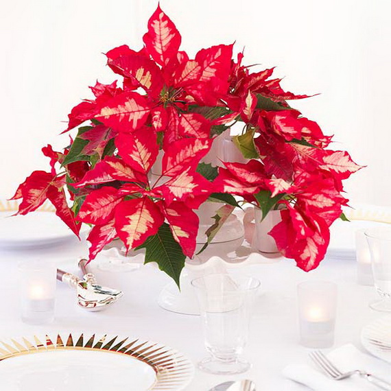 Decorate Christmas with 45 ideas poinsettias the holidays' most loved plant_10