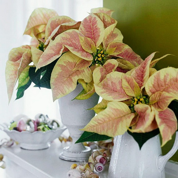 Decorate Christmas with 45 ideas poinsettias the holidays' most loved plant_14