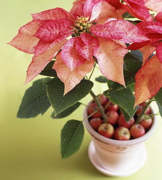 Decorate Christmas with 45 ideas poinsettias the holidays' most loved plant_16