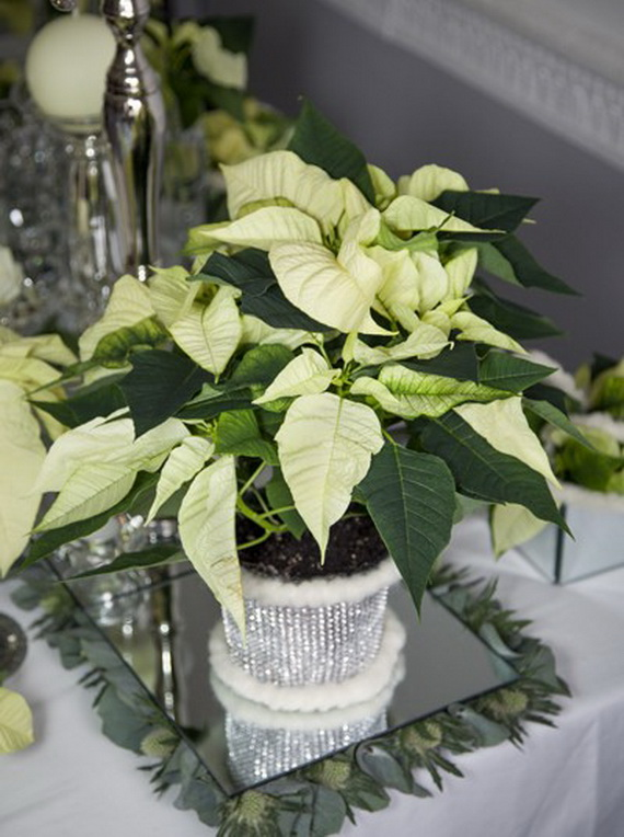 Decorate Christmas with 45 ideas poinsettias the holidays' most loved plant_24