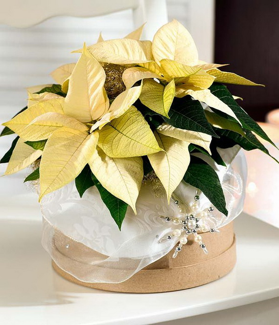 Decorate Christmas with 45 ideas poinsettias the holidays' most loved plant_27