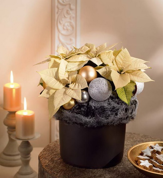 Decorate Christmas with 45 ideas poinsettias the holidays' most loved plant_32