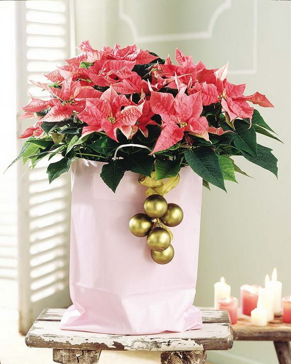 Decorate Christmas with 45 ideas poinsettias the holidays' most loved plant_34
