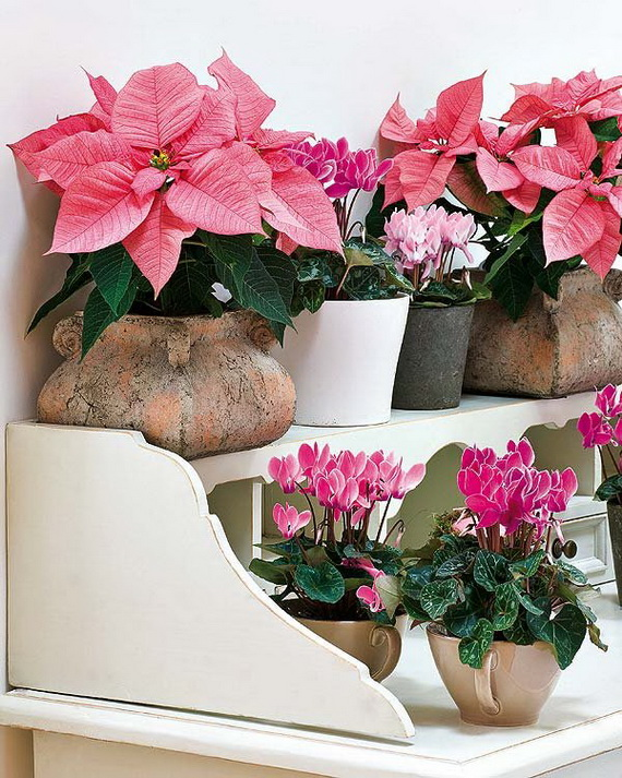 Decorate Christmas with 45 ideas poinsettias the holidays' most loved plant_40
