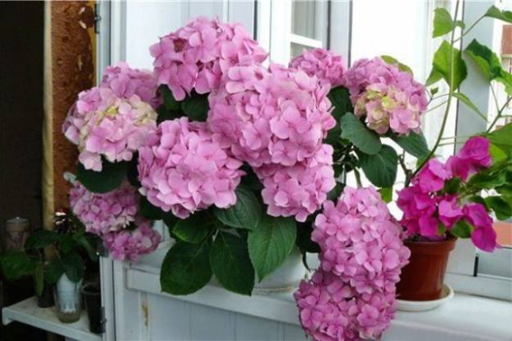 Fresh Early Bloomers Decorating Ideas for Valentine (35)