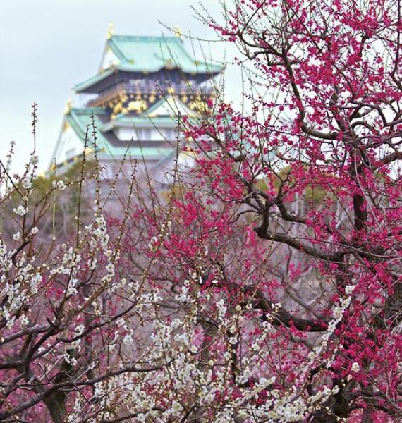 The Harmony and Beauty outside the Osaka Castle Japan (26)