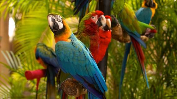 Jungle Island Miami (13)