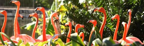 Jungle Island Miami (4)