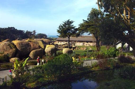san_francisco_zoo_and_gardens_-11