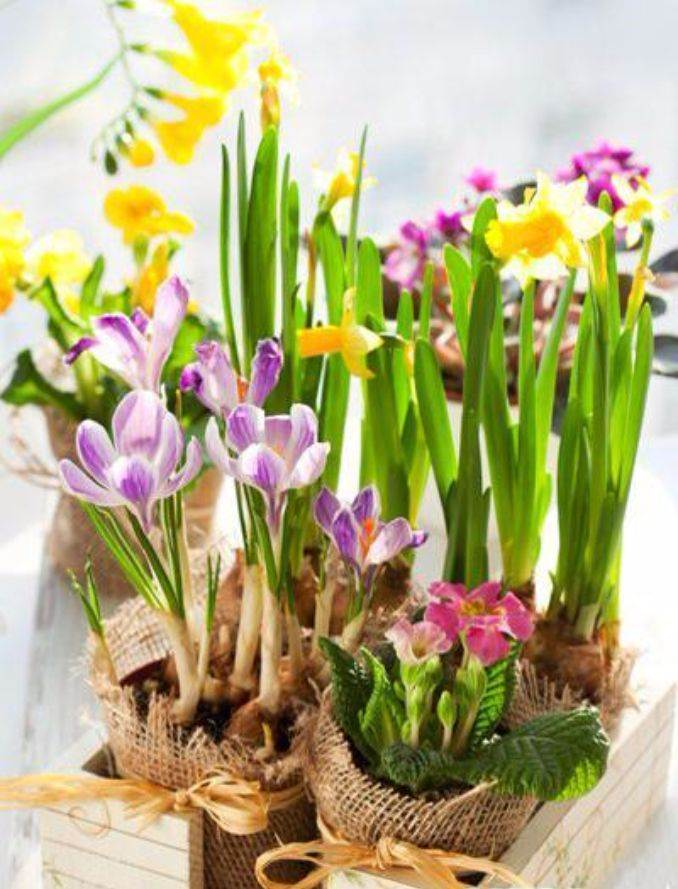 Bringing Spring Home 55 Gorgeous Greenery Touches Inspired by Nature (6)