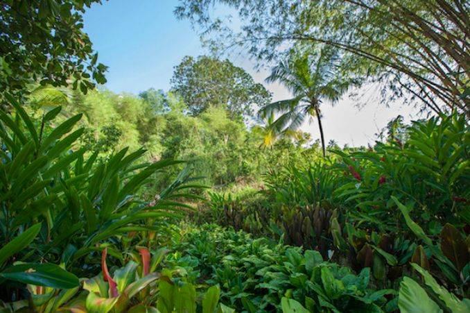 Tri Lanka SRI LANKAS STYLISH NEW RESORT (24)