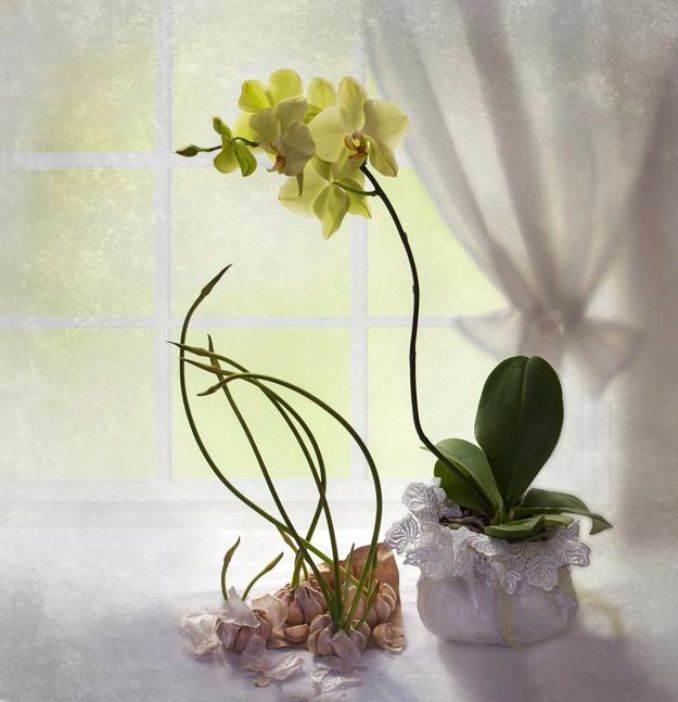 elegant-flower-arrangements-table-centerpiece-ideas-20
