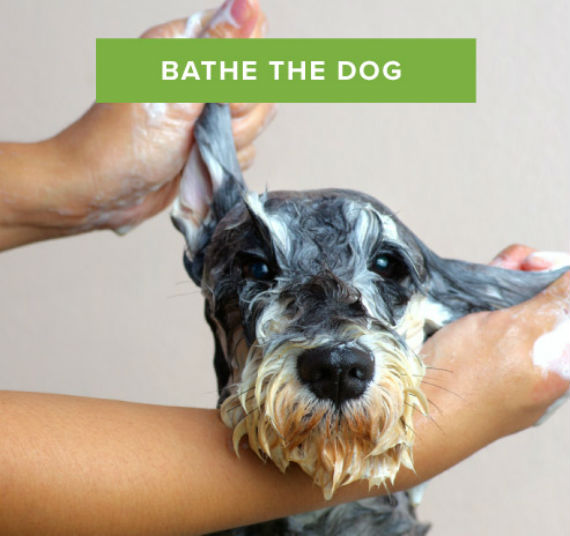 Acts of Service bathe-the-dog