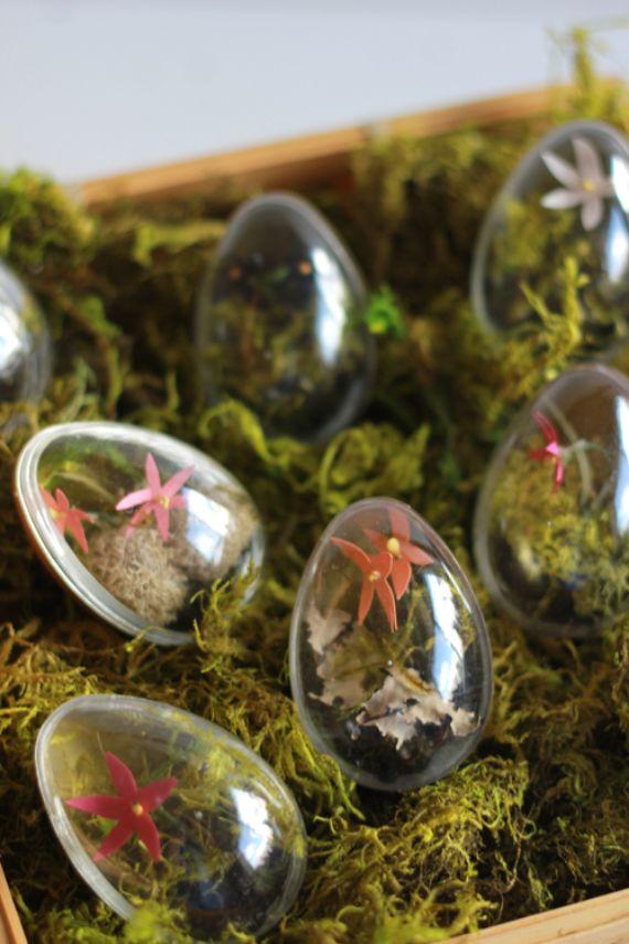 Easter egg terrariums (1)